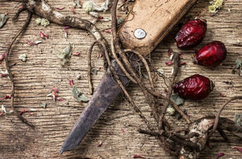 Application of wild rose roots in folk medicine