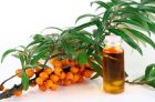 Sea-buckthorn oil, properties and application